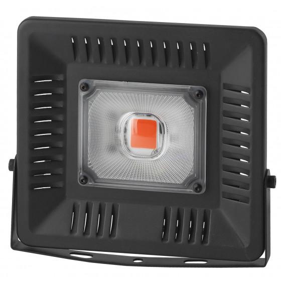 ЭРА Прожектор красно-синего спектра FITO-50W-LED BLUERED 2