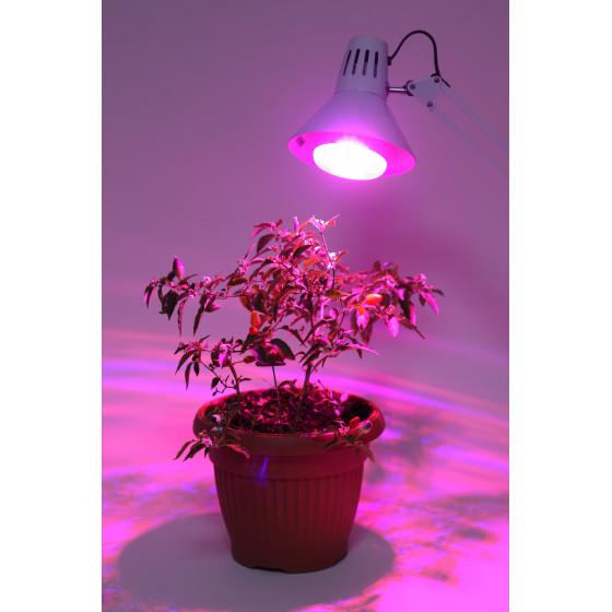 ЭРА Лампа красно-синего спектра FITO-16W-RB-E27-K 7