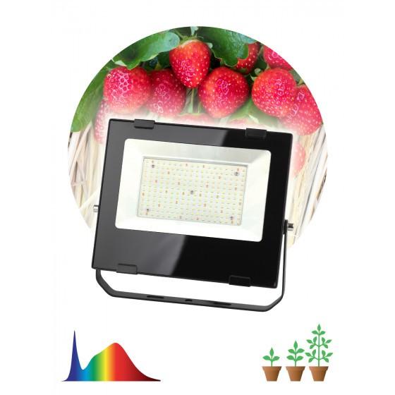 FITO-100W-Ra90-LED ЭРА ФИТО прожектор для цветения и плодоношения 1