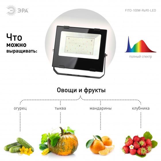 FITO-100W-Ra90-LED ЭРА ФИТО прожектор для цветения и плодоношения 4