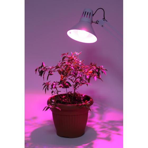 ЭРА Лампа красно-синего спектра FITO-10W-RB-E27-K 5