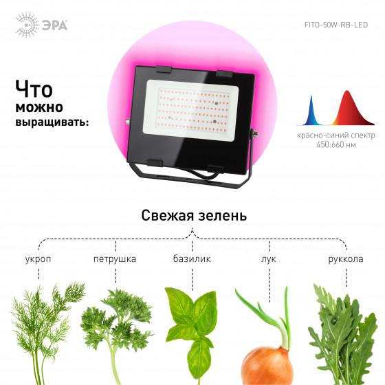 ЭРА Прожектор красно-синего спектра FITO-50W-RB-LED 4