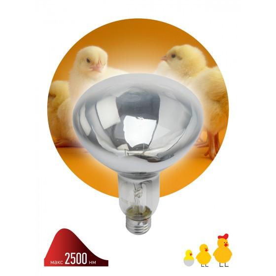 ЭРА Инфракрасная лампа ИКЗ 220-250 R127 E27 1