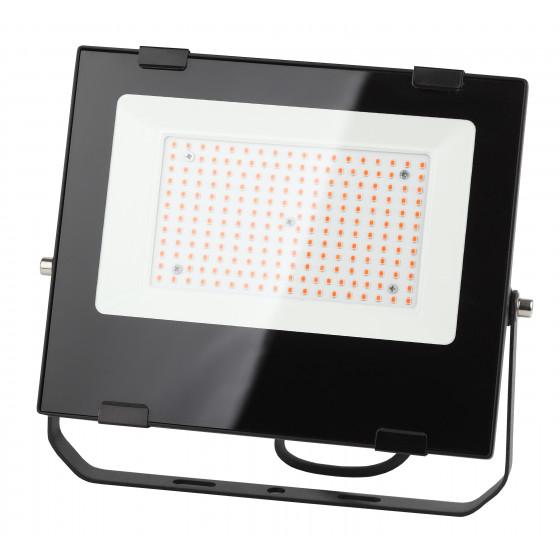 ЭРА Прожектор красно-синего спектра FITO-100W-RB-LED 2