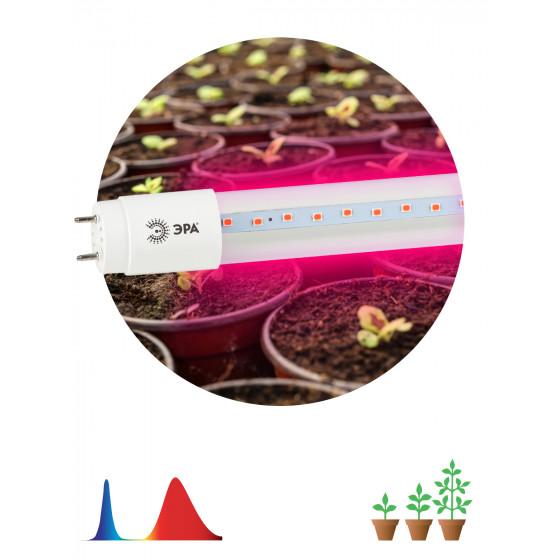 ЭРА Лампа красно-синего спектра FITO-9W-RB-Т8-G13-NL 1