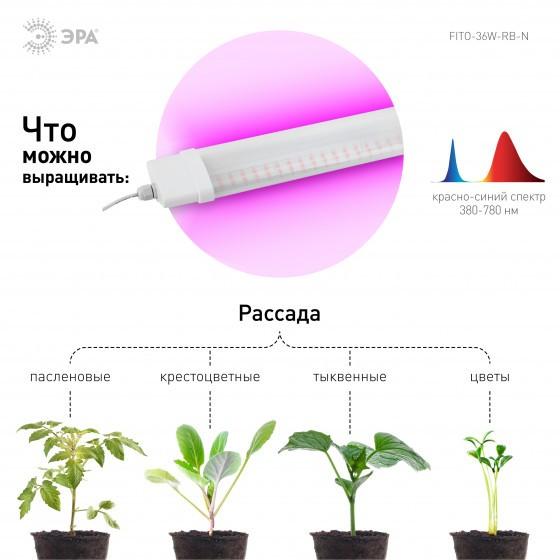 ЭРА Линейный светильник красно-синего спектра FITO-36W-RB-N 4