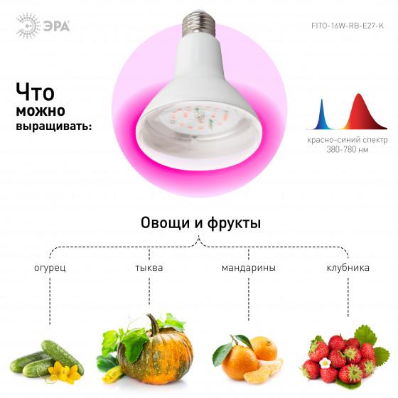 ЭРА Лампа красно-синего спектра FITO-16W-RB-E27-K 4