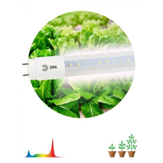 ЭРА Лампа полного спектра FITO-9W-Ra90-Т8-G13-NL 1
